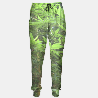 Thumbnail image of Bamboo 0413 Sweatpants, Live Heroes