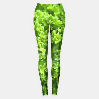 Thumbnail image of Cabbage pattern Leggings, Live Heroes