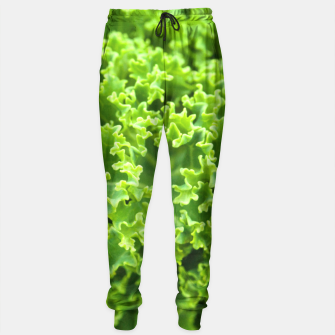 Thumbnail image of Cabbage pattern Sweatpants, Live Heroes