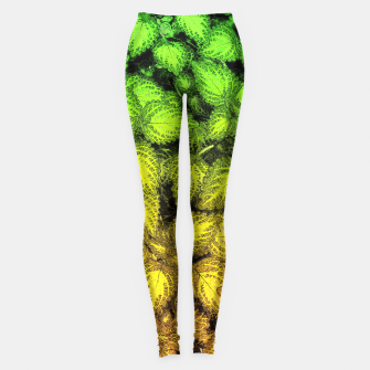 Thumbnail image of Lovely Leaves, in Green and Gold Leggings, Live Heroes