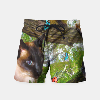 Thumbnail image of Siamese Sophie playing with ladybird Swim Shorts, Live Heroes