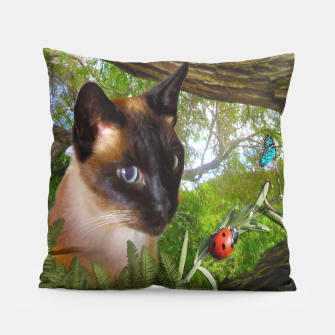 Thumbnail image of Siamese Sophie playing with ladybird Pillow, Live Heroes
