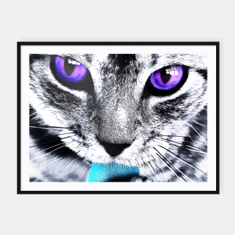 Purple eyes cat Framed poster obraz miniatury