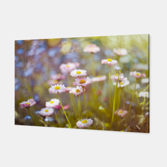 Thumbnail image of Daisies Canvas, Live Heroes