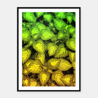 Lovely Leaves, in Green and Gold Framed poster thumbnail image