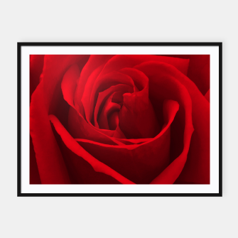 Thumbnail image of Red Rose Framed poster, Live Heroes