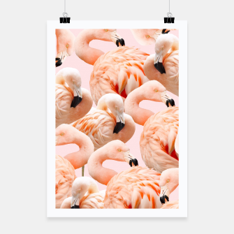 Thumbnail image of Flamingo Blush Poster, Live Heroes