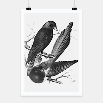 Vintage magpie and jack daw Poster obraz miniatury