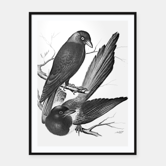 Thumbnail image of Vintage magpie and jack daw Framed poster, Live Heroes