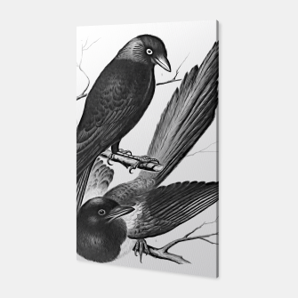 Thumbnail image of Vintage magpie and jack daw Canvas, Live Heroes