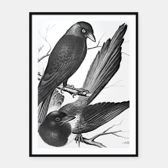 Miniatur Vintage magpie and jack daw Framed poster, Live Heroes