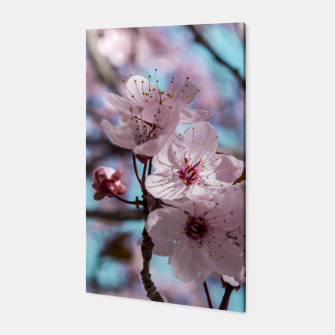 Thumbnail image of Sakura. Cherry Blossom photography Canvas, Live Heroes