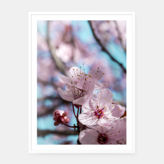 Thumbnail image of Sakura. Cherry Blossom photography Framed poster, Live Heroes
