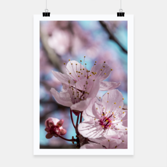Thumbnail image of Sakura. Cherry Blossom photography Poster, Live Heroes