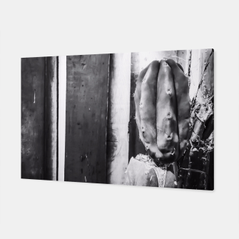Thumbnail image of cactus with wood wall background in black and white Canvas, Live Heroes