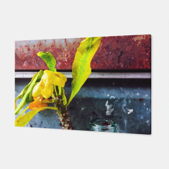 Thumbnail image of yellow euphorbia milii plant with old lusty metal background Canvas, Live Heroes