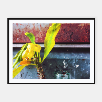 Thumbnail image of yellow euphorbia milii plant with old lusty metal background Framed poster, Live Heroes