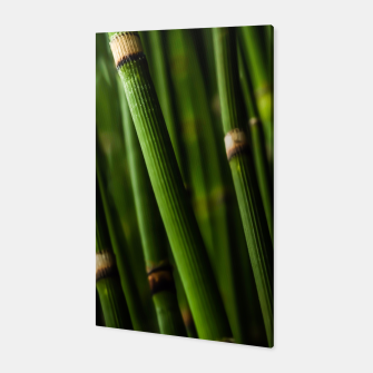 Thumbnail image of Bamboo Canvas, Live Heroes