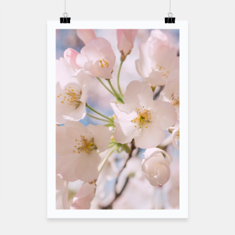 Miniaturka White Spring Cherry Trees Blossom Poster, Live Heroes