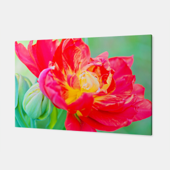 Thumbnail image of Unusual macro tulip over green background Canvas, Live Heroes