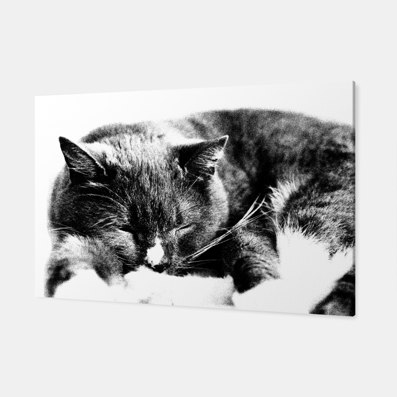 Image of Cute Sleepy Kitty Canvas - Live Heroes