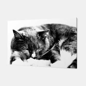 Cute Sleepy Kitty Canvas thumbnail image
