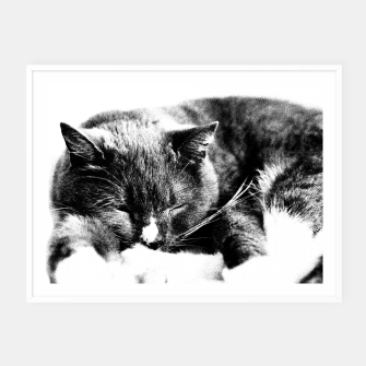 Thumbnail image of Cute Sleepy Kitty Framed poster, Live Heroes