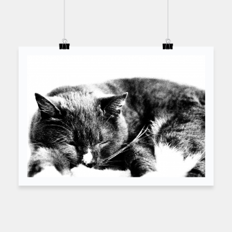 Thumbnail image of Cute Sleepy Kitty Poster, Live Heroes