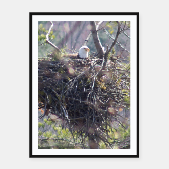 Thumbnail image of Perched Eagle Poster, Live Heroes