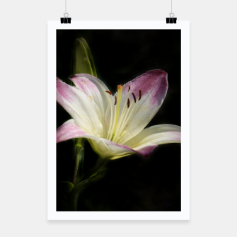 Thumbnail image of flowers on black -1- Poster, Live Heroes