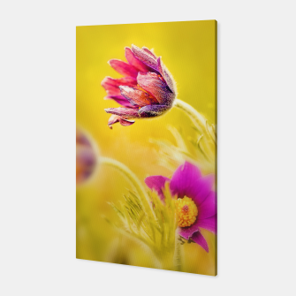 Thumbnail image of Spring Sleeping Flower Canvas, Live Heroes