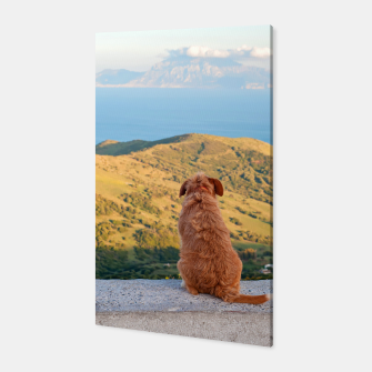Miniaturka Lonely dog watching on Gibraltar strait Canvas, Live Heroes