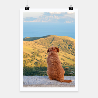 Miniaturka Lonely dog watching on Gibraltar strait Poster, Live Heroes