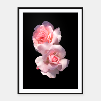 Miniatur Beautiful pink Roses  Framed poster, Live Heroes