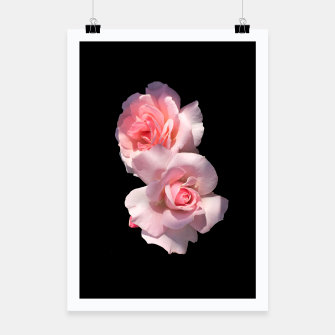 Thumbnail image of Beautiful pink Roses  Poster, Live Heroes