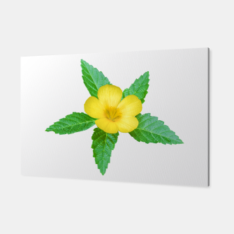 Miniatur Cute Yellow Flower with Leaves Photo Canvas, Live Heroes