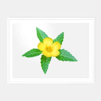 Miniatur Cute Yellow Flower with Leaves Photo Framed poster, Live Heroes