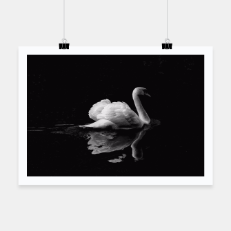 Miniaturka That Beauty: Black and White Swan Photography Poster, Live Heroes