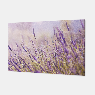 Thumbnail image of Lavender Canvas, Live Heroes