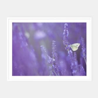 Thumbnail image of Lavender dream Plakaty w ramie , Live Heroes