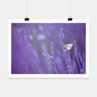 Thumbnail image of Lavender dream Plakat, Live Heroes