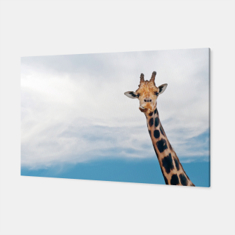 Thumbnail image of Giraffe neck and head against the clear blue sky Canvas, Live Heroes