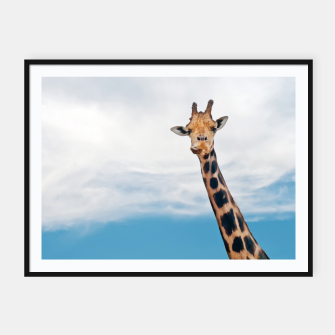 Thumbnail image of Giraffe neck and head against the clear blue sky Framed poster, Live Heroes