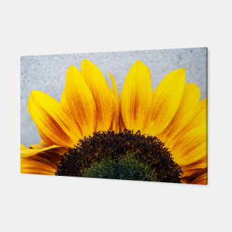 Thumbnail image of Blooming sunflower. Conceptual image Sun Rising Canvas, Live Heroes