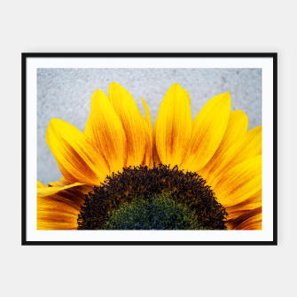 Thumbnail image of Blooming sunflower. Conceptual image Sun Rising Framed poster, Live Heroes