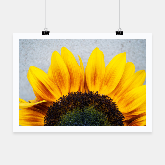 Thumbnail image of Blooming sunflower. Conceptual image Sun Rising Poster, Live Heroes