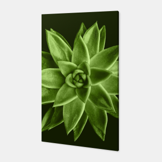 Greenery succulent Echeveria agavoides flower Canvas thumbnail image