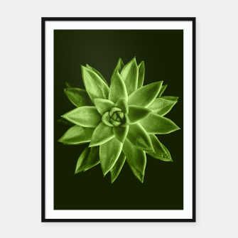 Greenery succulent Echeveria agavoides flower Framed poster thumbnail image