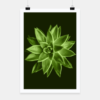 Greenery succulent Echeveria agavoides flower Poster thumbnail image