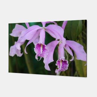Thumbnail image of Tropical Flowers Orchids Canvas, Live Heroes